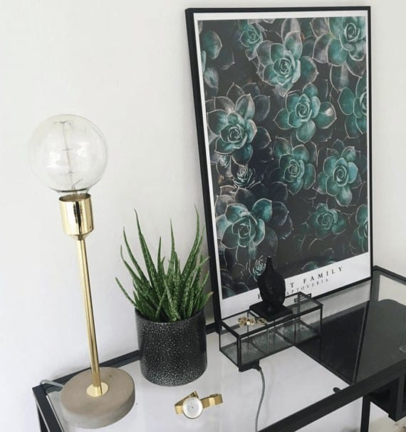 graptoveria-plakat-plante