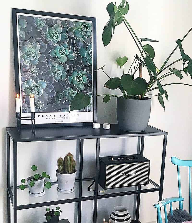 Graptoveria plakat - planter, sukkulenter, tekst