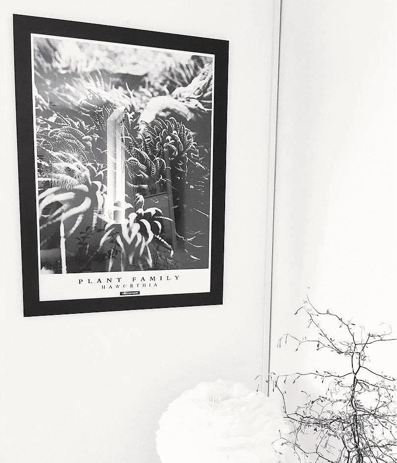 Grøn plante plakat i lys lejlighed i sort billederamme