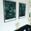 Morganianum og Graptoveria på hvid væg i lyst bolig over sofaen