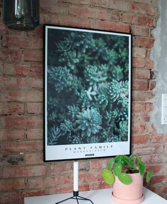 Morganianum Plakat