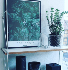 morganianum-plakat-plante