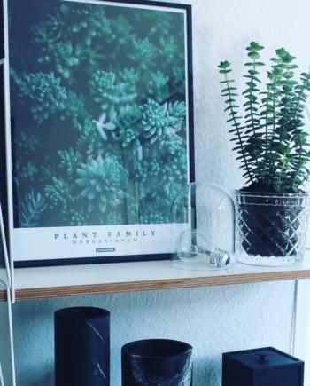 Grøn plante plakat i 30x40 cm stående på reol ved siden af glas potteplante