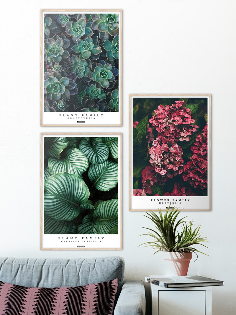 Plante plakatsæt med lys ramme