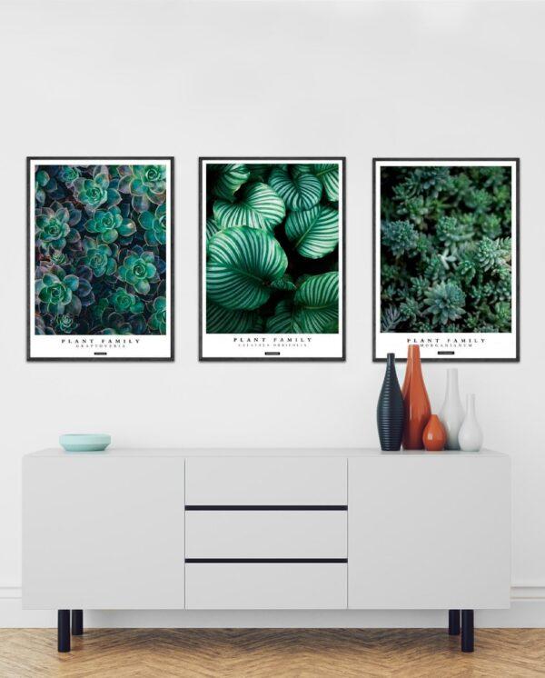 Plants plakater - Plakatsæt