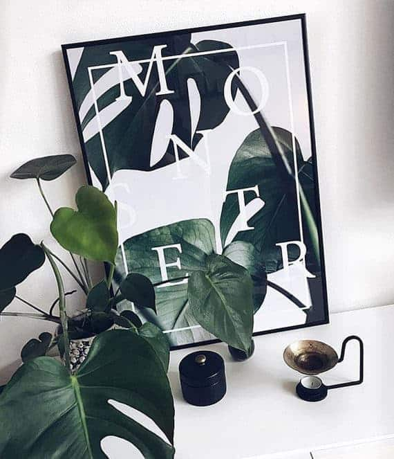 Monstera plakat - botanisk monstera deliciosa plante