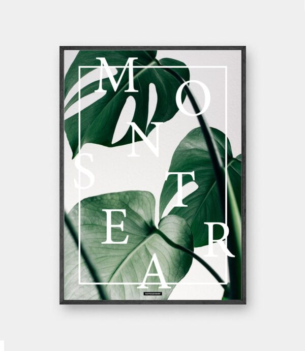 Monstera plakat - Grøn monstera deliciosa plante billede i sort ramme