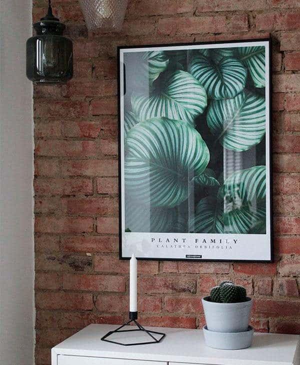 Miljøbillede af plante plakaten Calathea Orbifolia i sort ramme