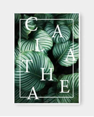 Calathea plante med tekst og hvid billedramme