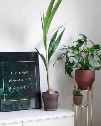 Grøn marmor plakat med guld tekst med grønne planter