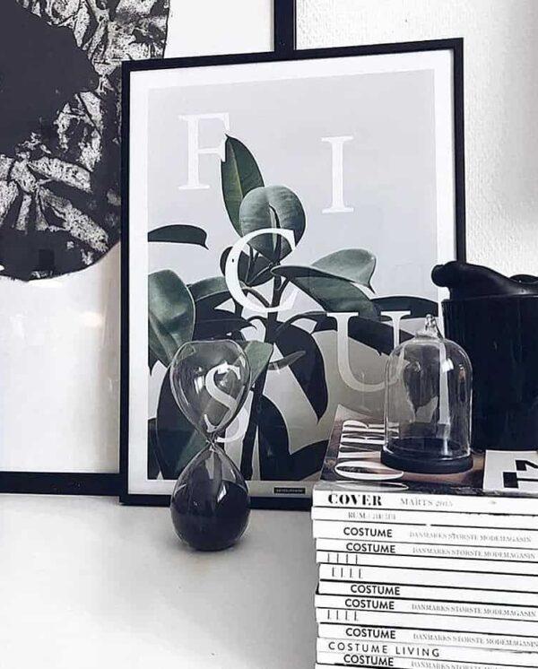 Ficus Elastica plakat - botanik, planter og tekst