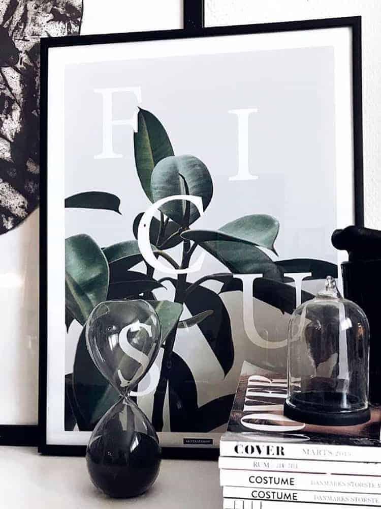 ficus elastica plante fotokunst plakat