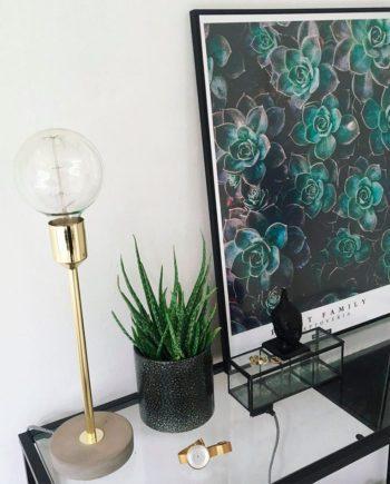 Graptoveria plante plakat på skrivebord med guldlampe