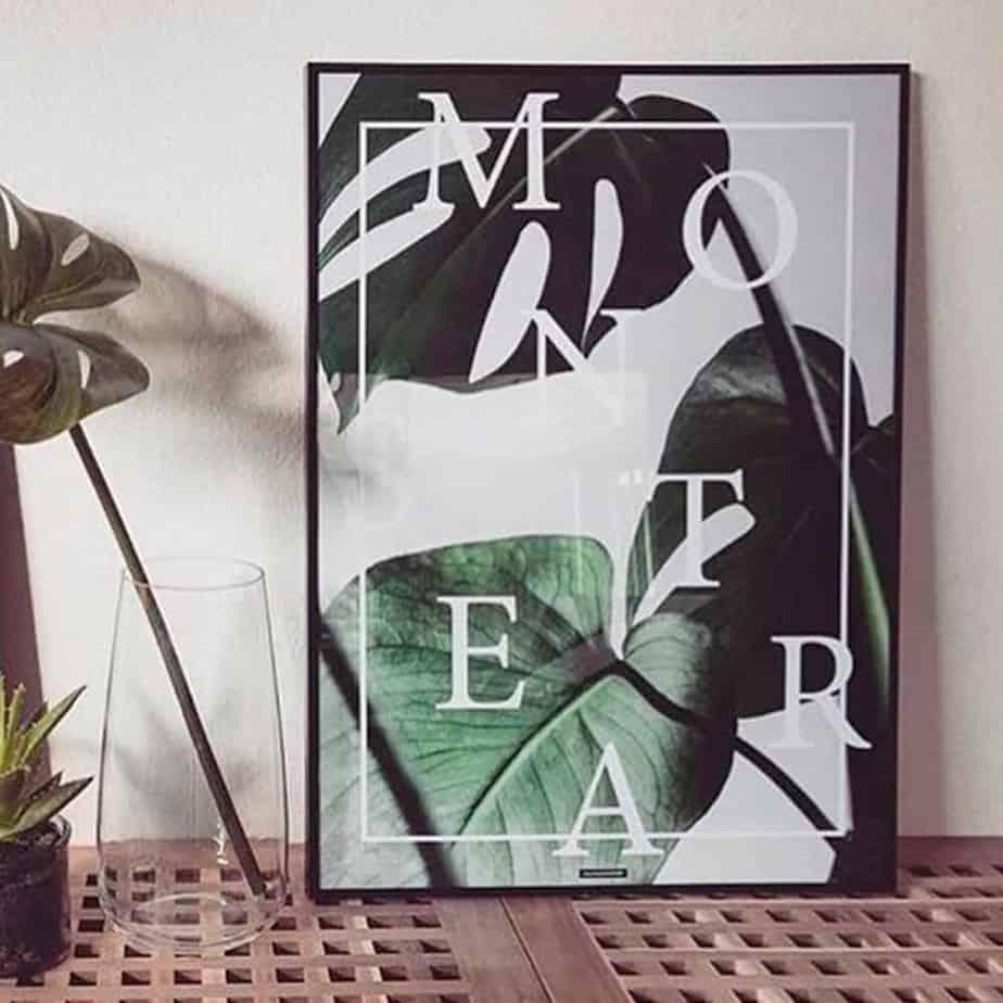 Plante plakat monstera i sort billederamme