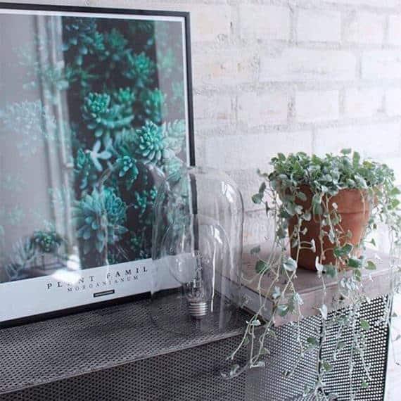 Morganianum plante plakat på sort hylde med potteplante