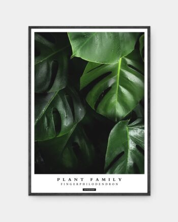 Fingerphilodendron plakat i ramme