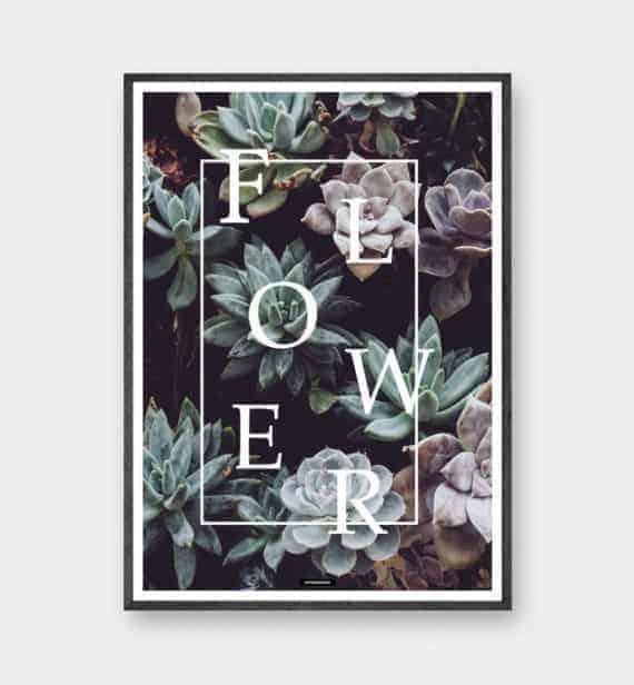 flower-plante-botanisk-plakat