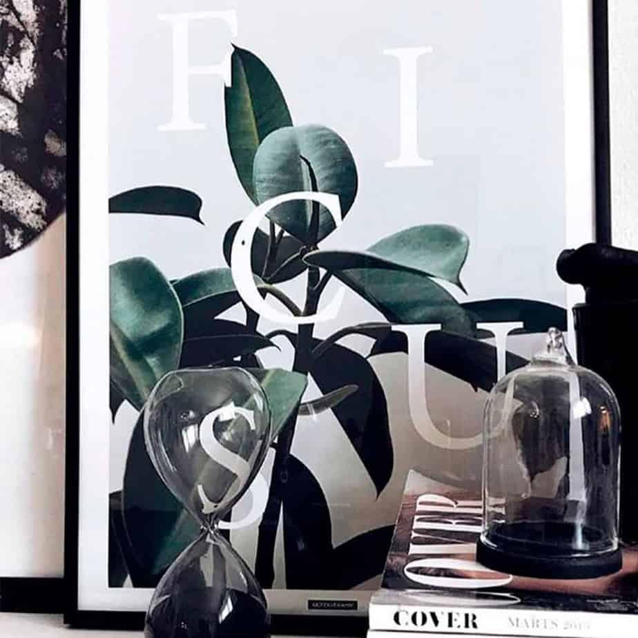 Plante plakat, Ficus med glas interiør