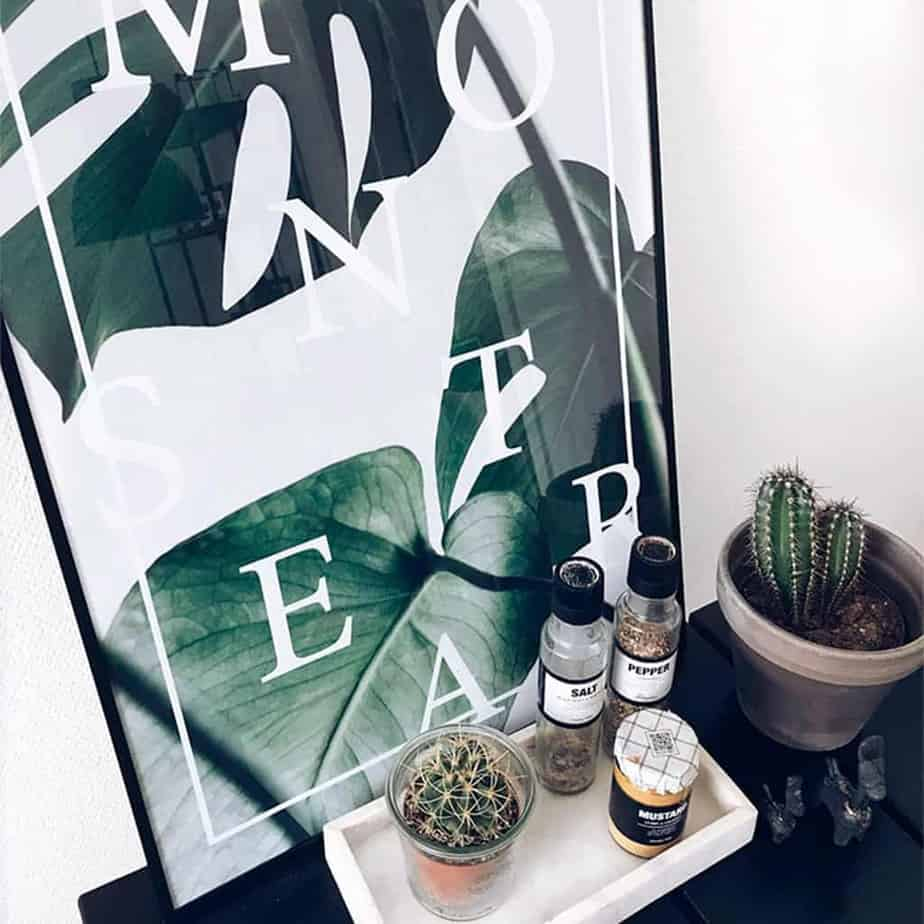 Monstera plakat