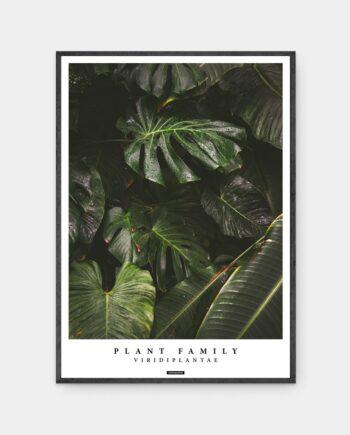 Viridiplantae plakat med ramme