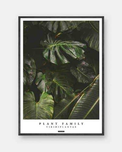 Viridi Plantae plakat