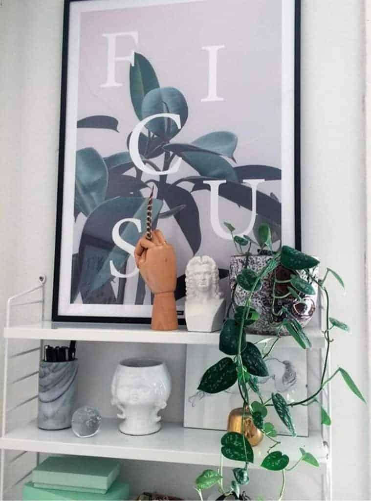 Gummifigen plante plakat - Ficus Elastica plakat