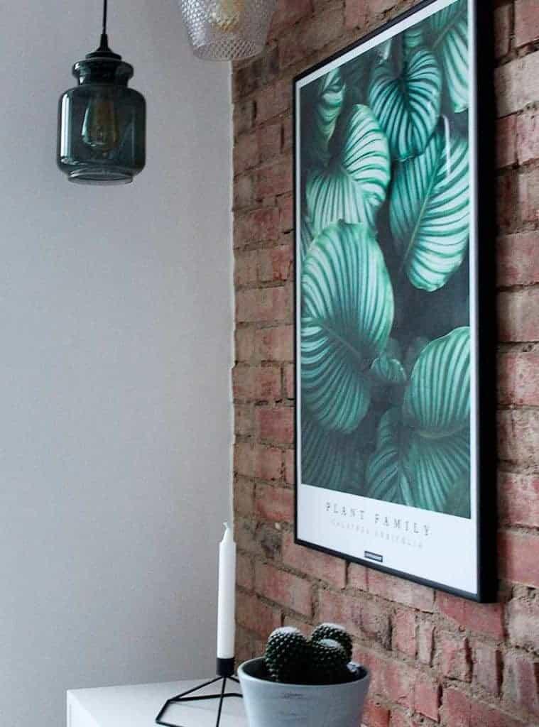 Groen plante plakat - Calathea Orbifolia plakat