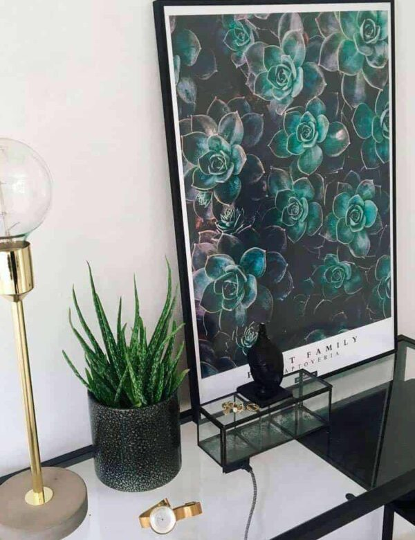 Botanisk plante sukkulent plakat - Graptoveria plakat