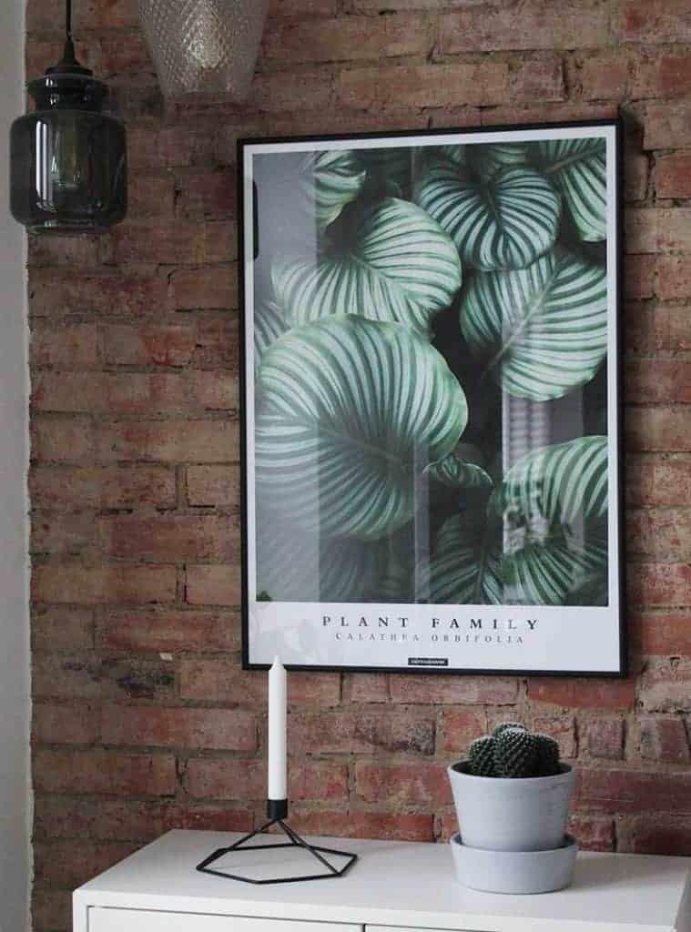Grøn botanisk plante plakat - Calathea Orbifolia plakat