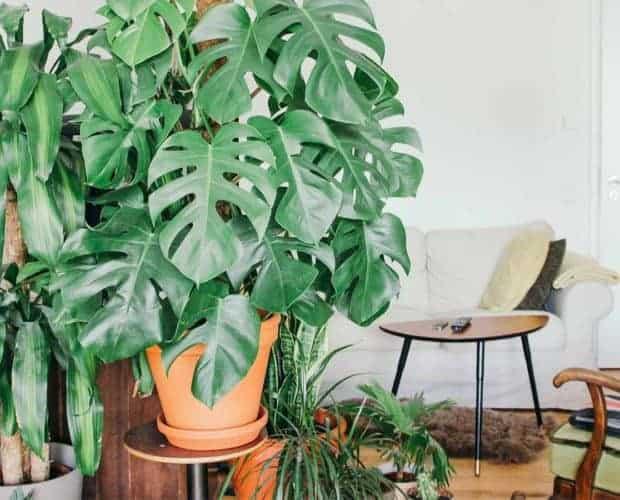 Botanisk trend: 10 botaniske plakater til hjemmet