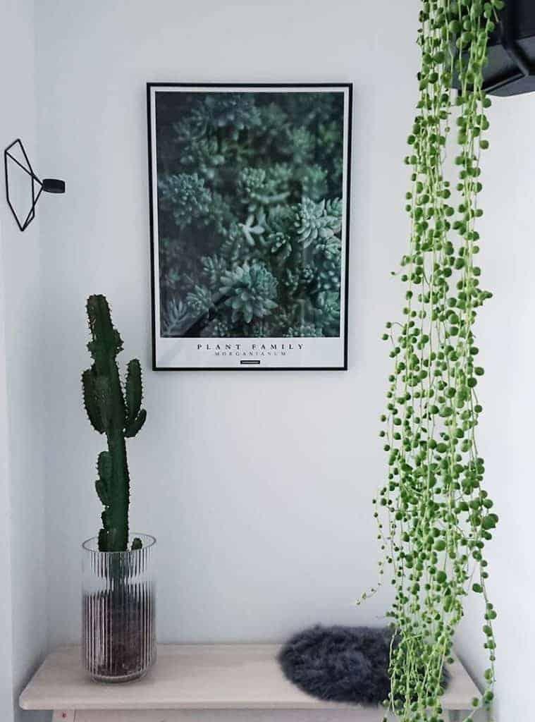 Botaniske plakater - Inspiration