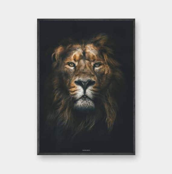 Lion King plakat - dyre plakat