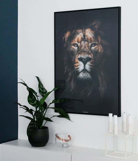 Lion King plakat - dyremotiv løve plakat