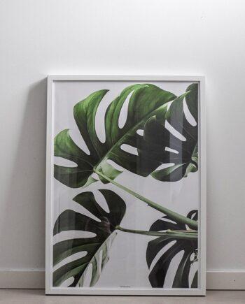 Monstera II plante plakat