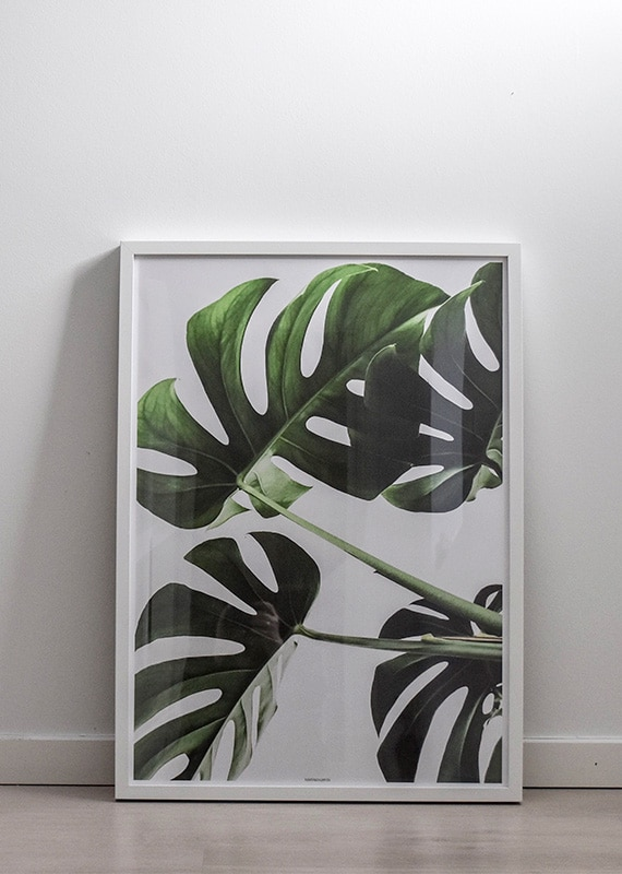 Monstera II plante plakat