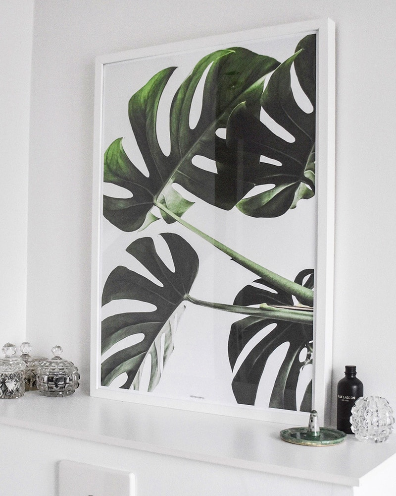 Monstera II plakat - Monstera Deliciosa