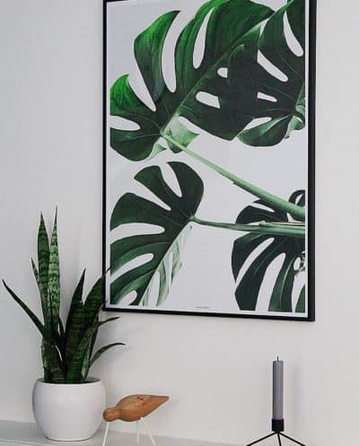 Monstera II - planter og botanik