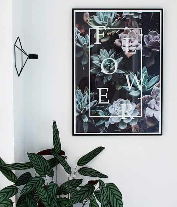flower-plante-blomster-plakater