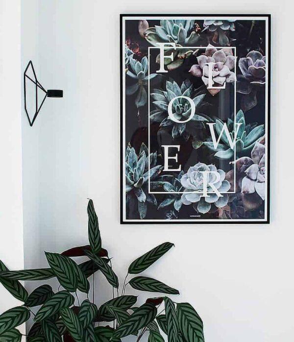 Flower plakat - botanik, blomster og sukkulenter