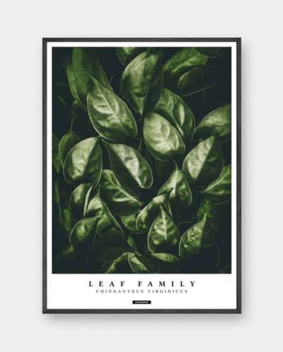 Fringetree plakat - Botanisk grøn blad plakat