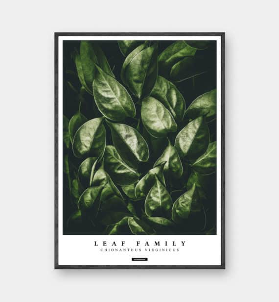 fringetree-botanik-planter-plakat