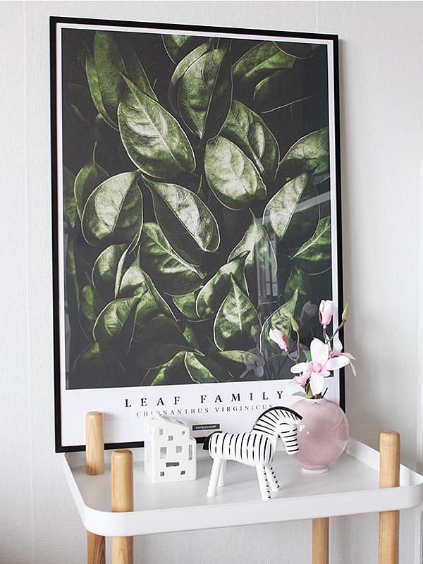 Fringetree plante plakat