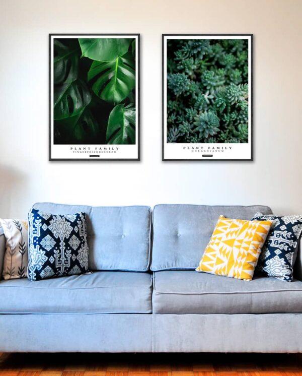 Plakatsæt - Fingerphilodendron og Morganianum