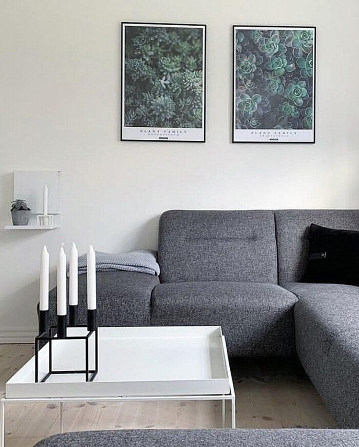Perfect pair - Graptoveria og Morganianium plante plakater