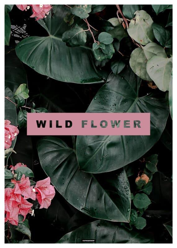 Wild Flower plante plakat
