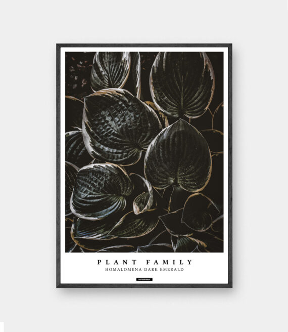 Homalomena plakat - planter og botanik