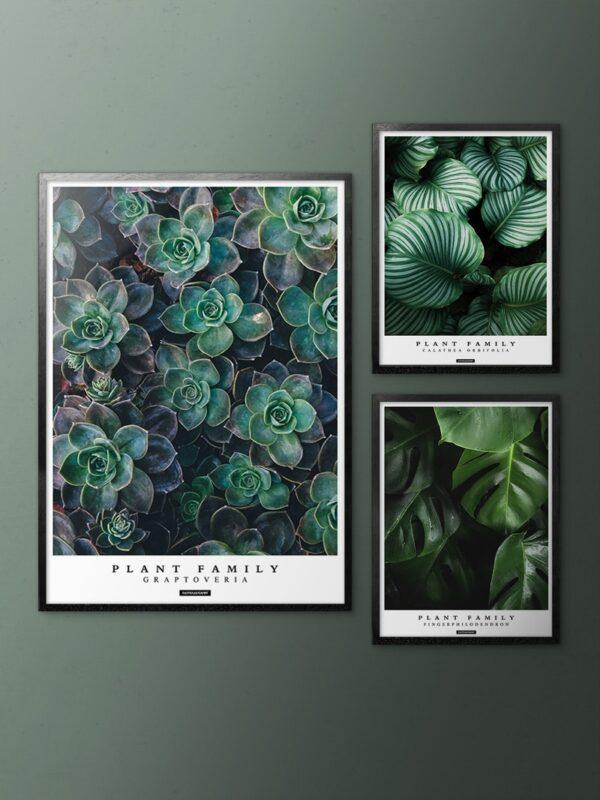 Grøn plante billedvæg med sorte aluminium rammer