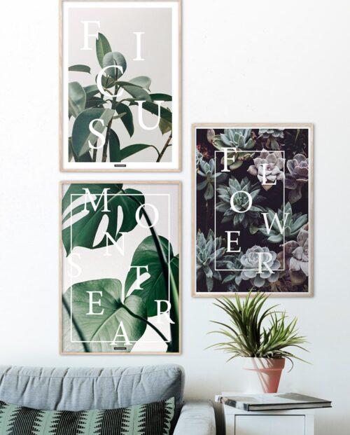 Plakatsæt med 3 plante og blomster plakater